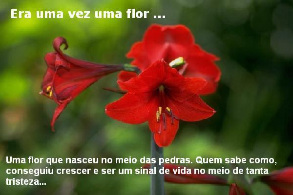 flor_da_amizade