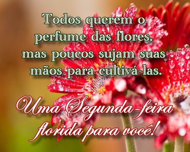 segunda-feira-perfume-das-flores